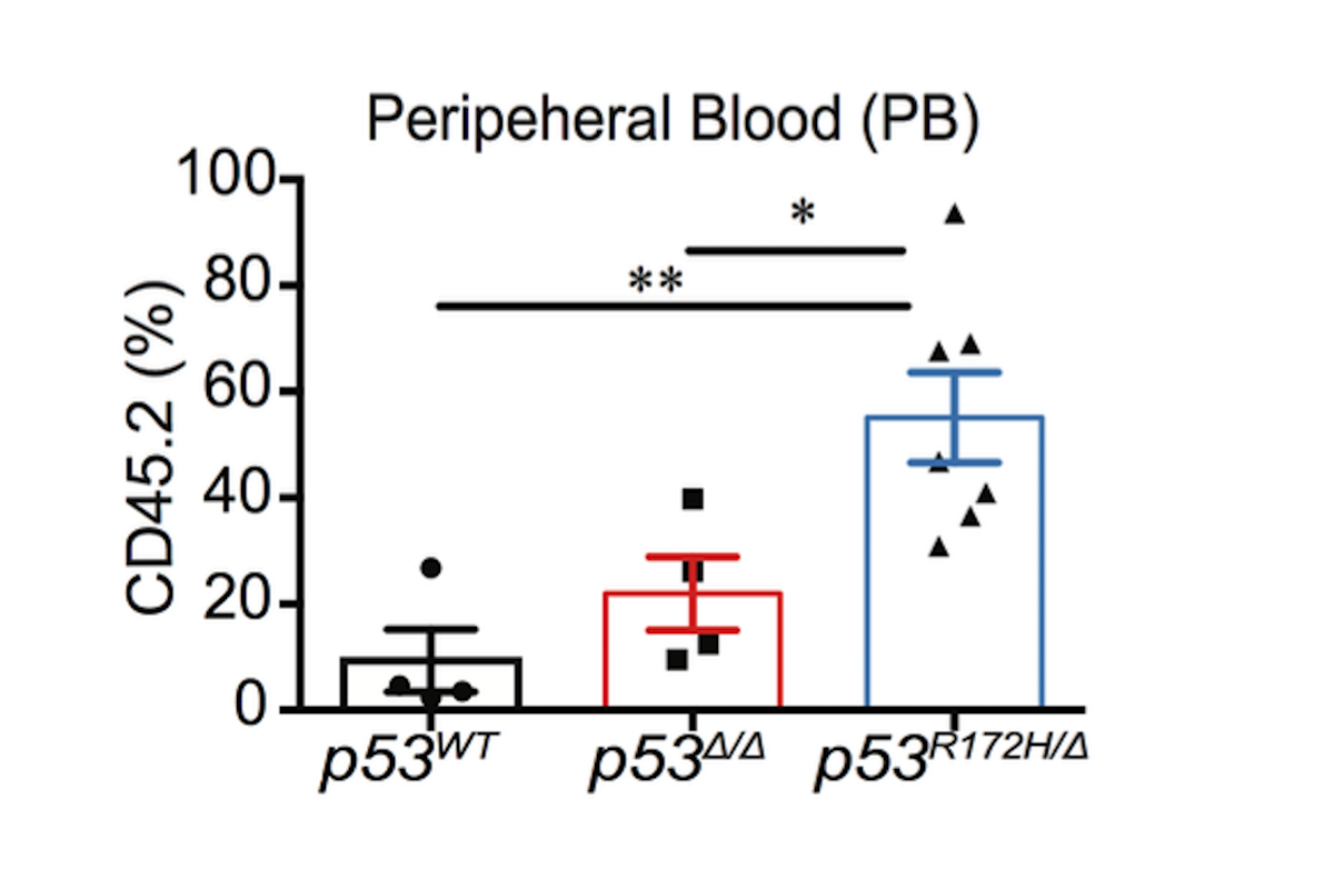 Mutant p53 confers greater self renewal capacity in hematopoietic stem cells in vivo than loss of p53, demonstrating a novel gain of function effect on differentiation not unleashed by loss of wt p53 function alone.