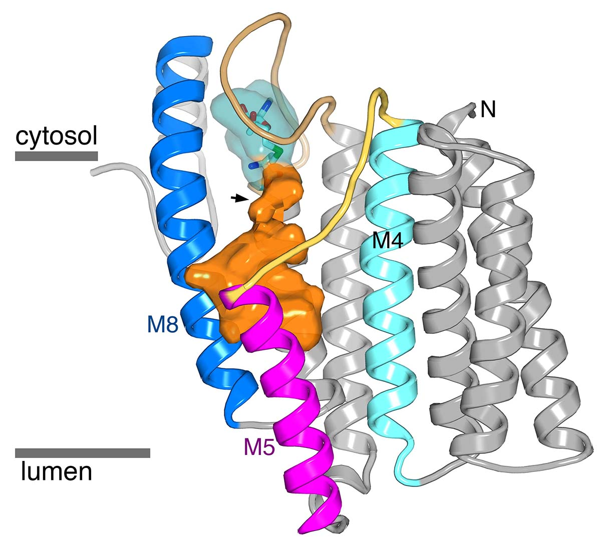 High-resolution structure of ICMT.