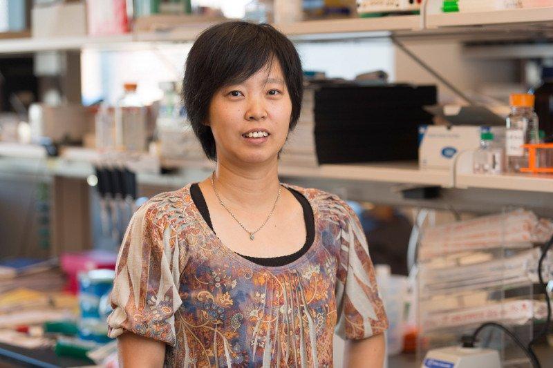 Jing  Li, PhD