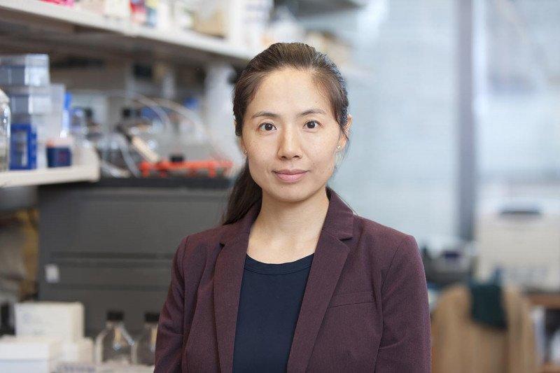 Linlin  Wang , PhD