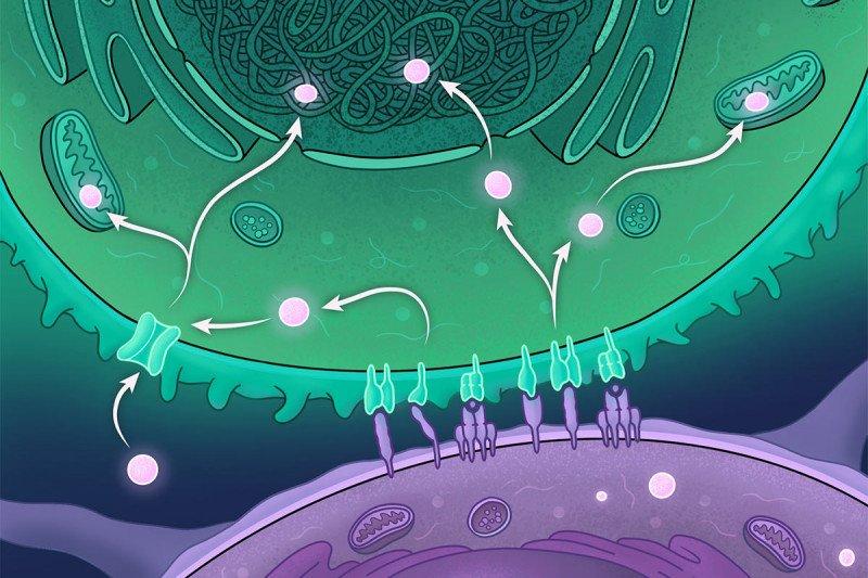 Molecular regulation of immune metabolism