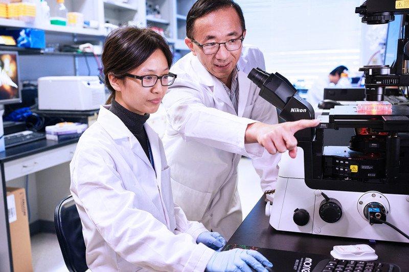 SKI cell biologists Junmei Yi and Xuejun Jiang