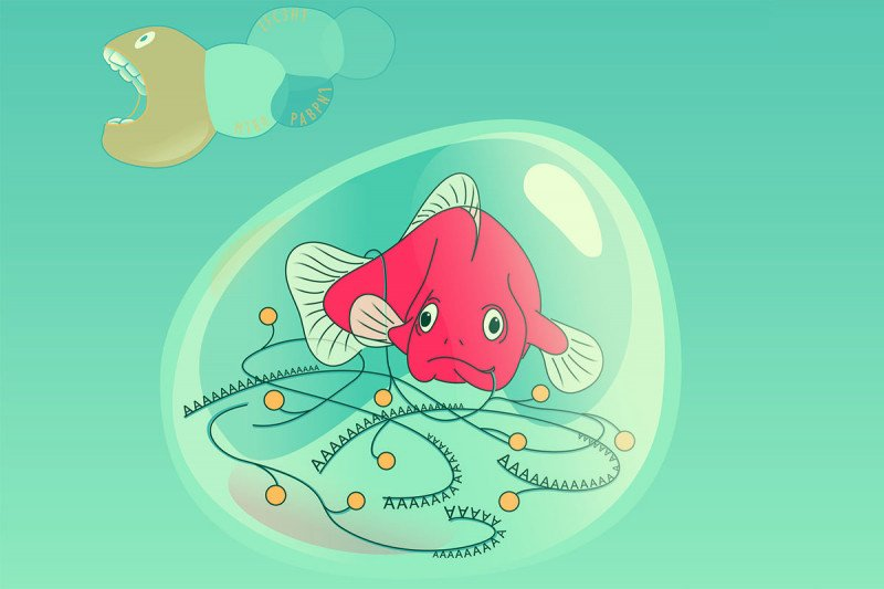 Illustration of a fish inside a bubble-like structure. The fish has strands of genetic material coming from its mouth. Outside the bubble is a worm-like creature with an open mouth, ready to gobble up the fish.