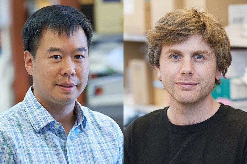 Sloan Kettering Institute immunologists Joseph Sun and Sam Sheppard
