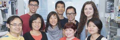 The Xiaolan Zhao Lab