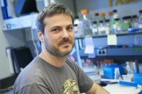 Joaquim Grego-Bessa, PhD