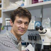 Balázs Enyedi, MD, PhD