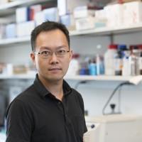 Nick P.M. Chen, PhD