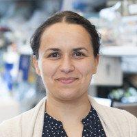 Sahra Bodo, PhD
