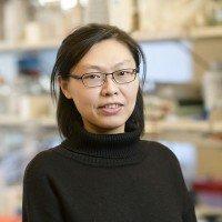 Yulei Zhao