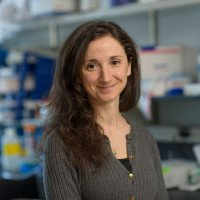 Daniela Cornacchia, PhD