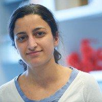 Noor Gammoh, PhD