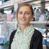 Anne Chauveau, PhD