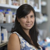 Rocio Hernandez Martinez, PhD