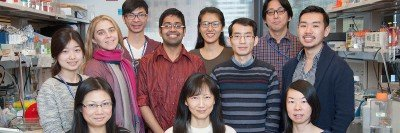 The Cheng Lab
