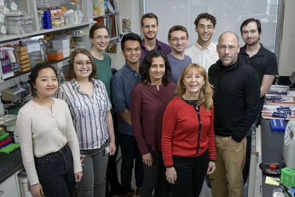 The Lima Lab