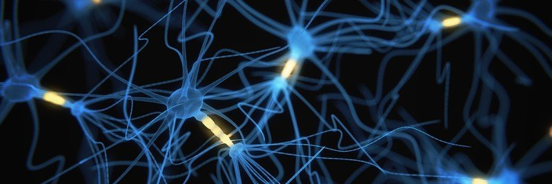 A network of neurons