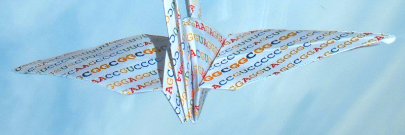 An origami crane illustrates the importance of RNA folding for regulating gene translation. The bolded sequences on the crane's wings indicate the portion that is critical for the manufacture of many cancer-causing proteins.